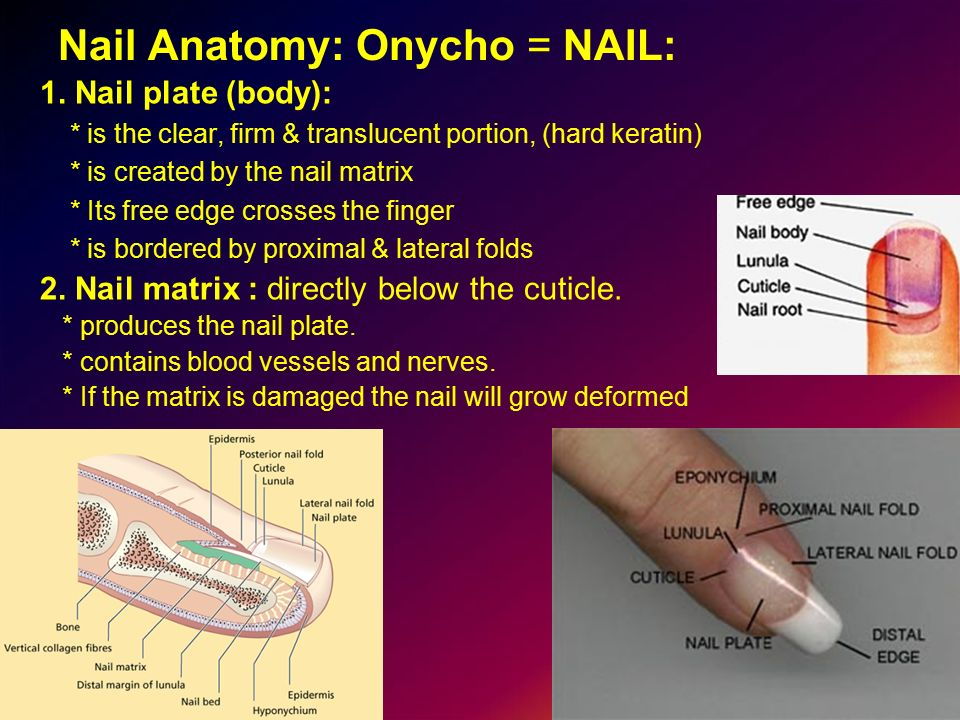 Nail And Nail Disorders Ppt Video Online Download