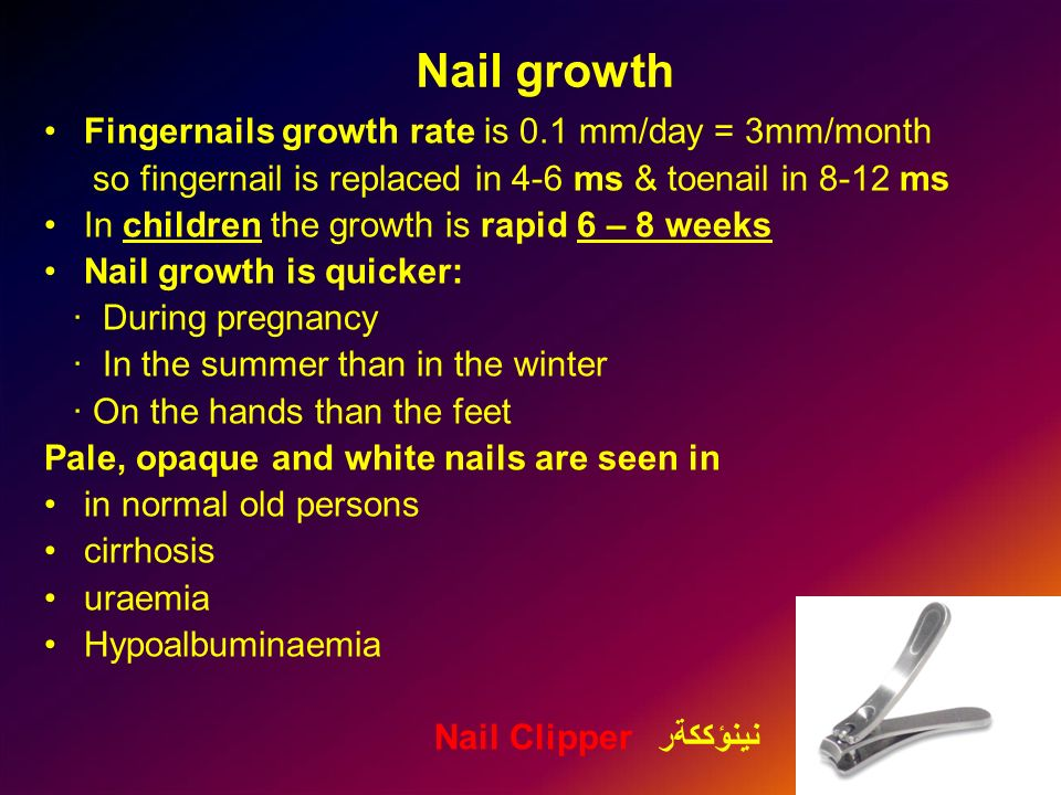 Nail growth Fingernails growth rate is 0.1 mm/day = 3mm/month