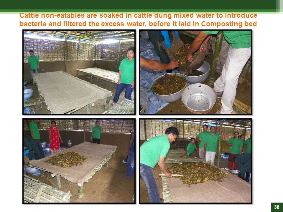 Cattle non-eatables are soaked in cattle dung mixed water to introduce bacteria and filtered the excess water, before it laid in Composting bed