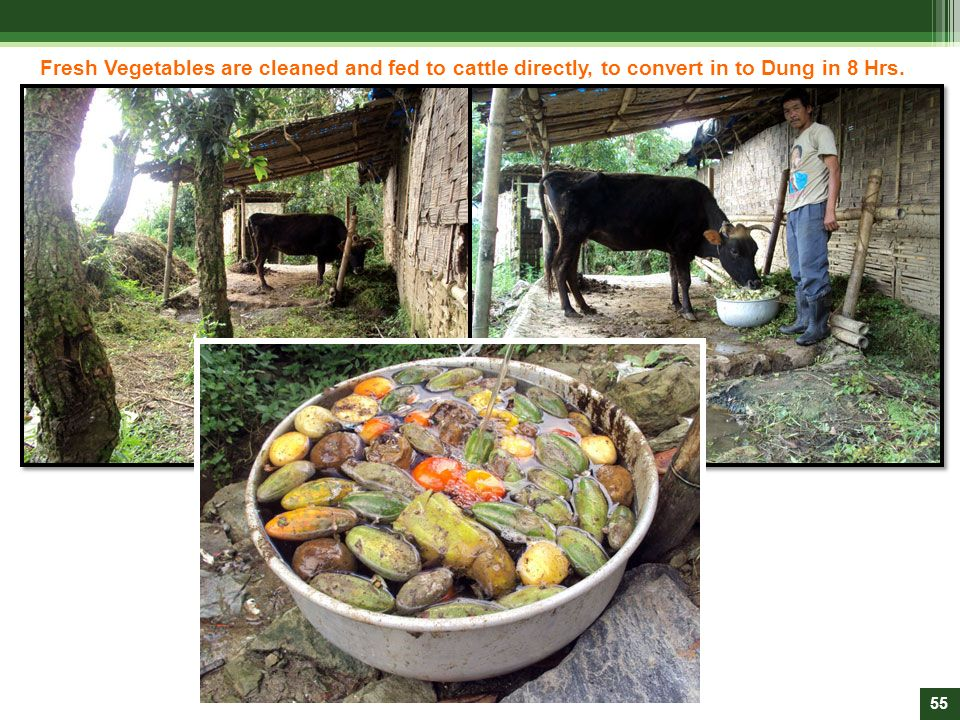 Fresh Vegetables are cleaned and fed to cattle directly, to convert in to Dung in 8 Hrs.