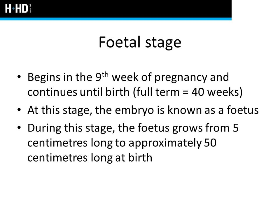 Foetal stage Begins in the 9th week of pregnancy and continues until birth (full term = 40 weeks) At this stage, the embryo is known as a foetus.