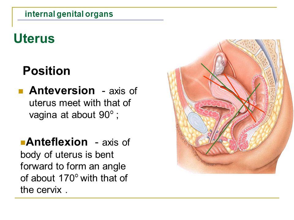 The Female Genital Organs Shandong University Liu Zhiyu Ppt Video