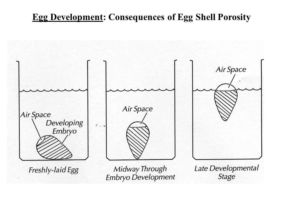 Egg Development: Consequences of Egg Shell Porosity