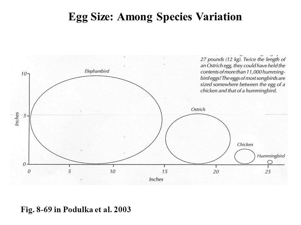 Egg Size: Among Species Variation