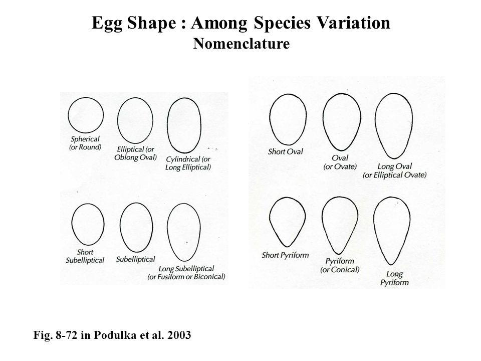 Egg Shape : Among Species Variation