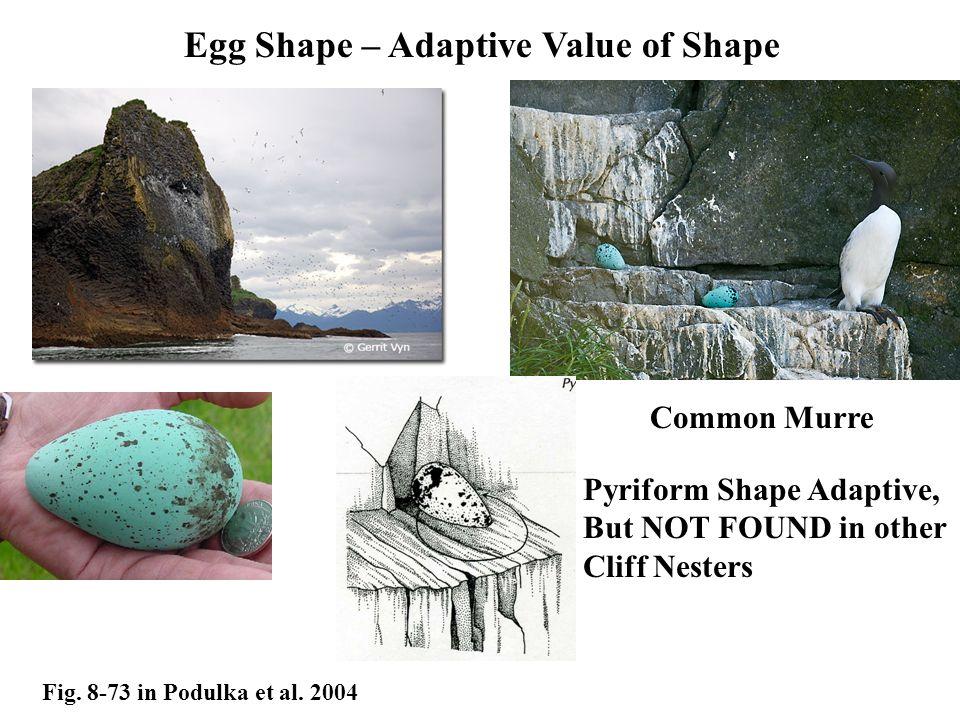 Egg Shape – Adaptive Value of Shape