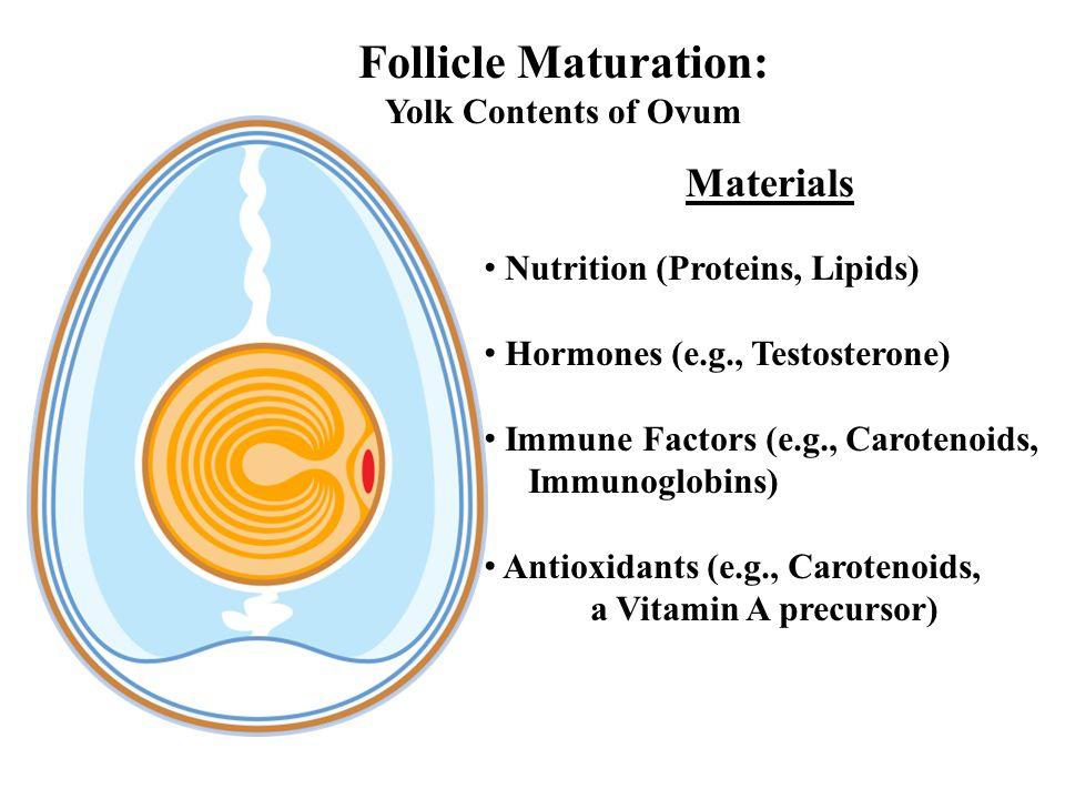 Follicle Maturation: Materials Yolk Contents of Ovum