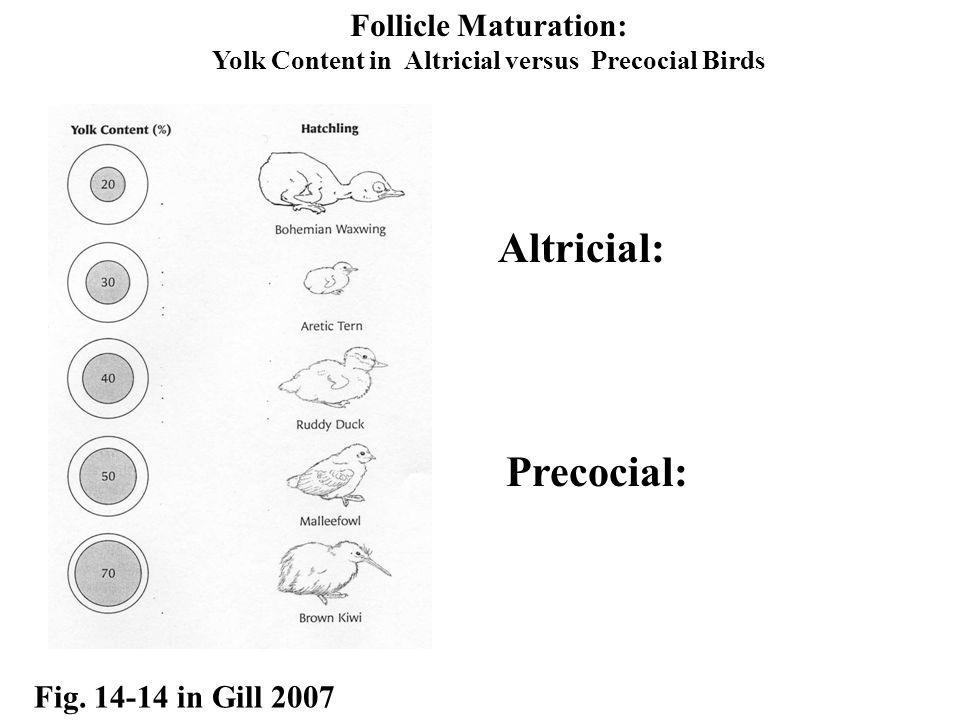 Yolk Content in Altricial versus Precocial Birds