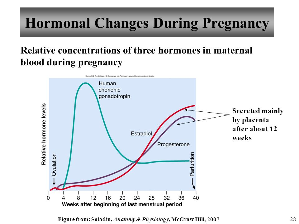 Anatomy and Physiology Pregnancy, Growth, and Development - ppt download