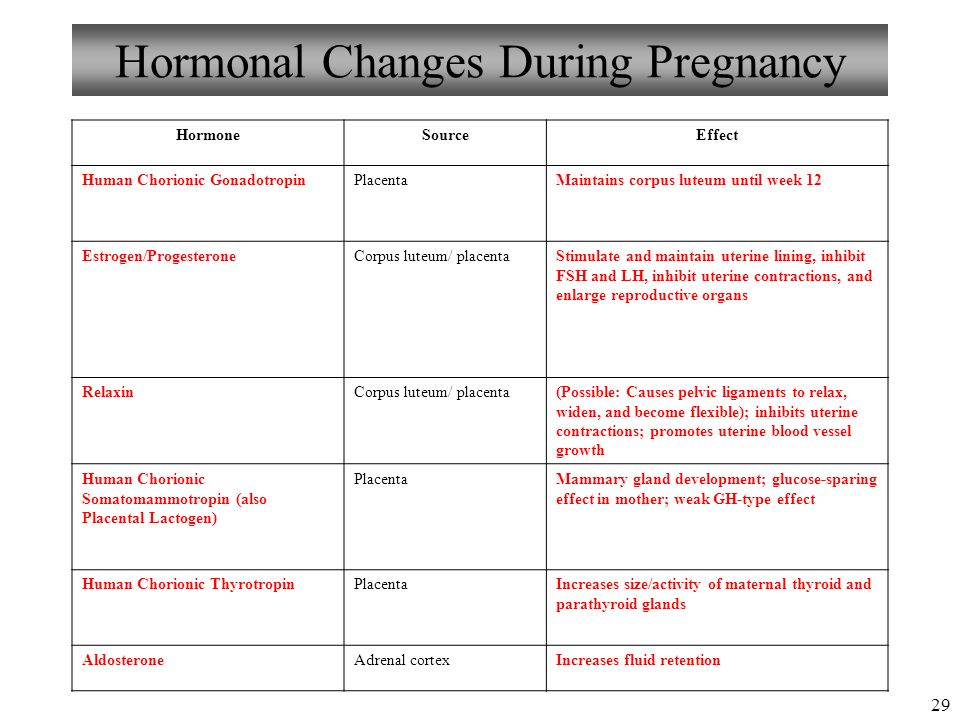 Human anatomy during pregnancy