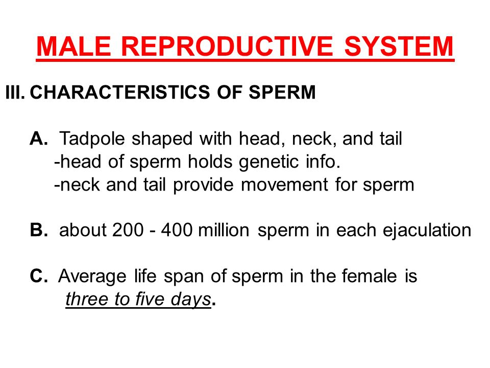Life span of sperm in the female body