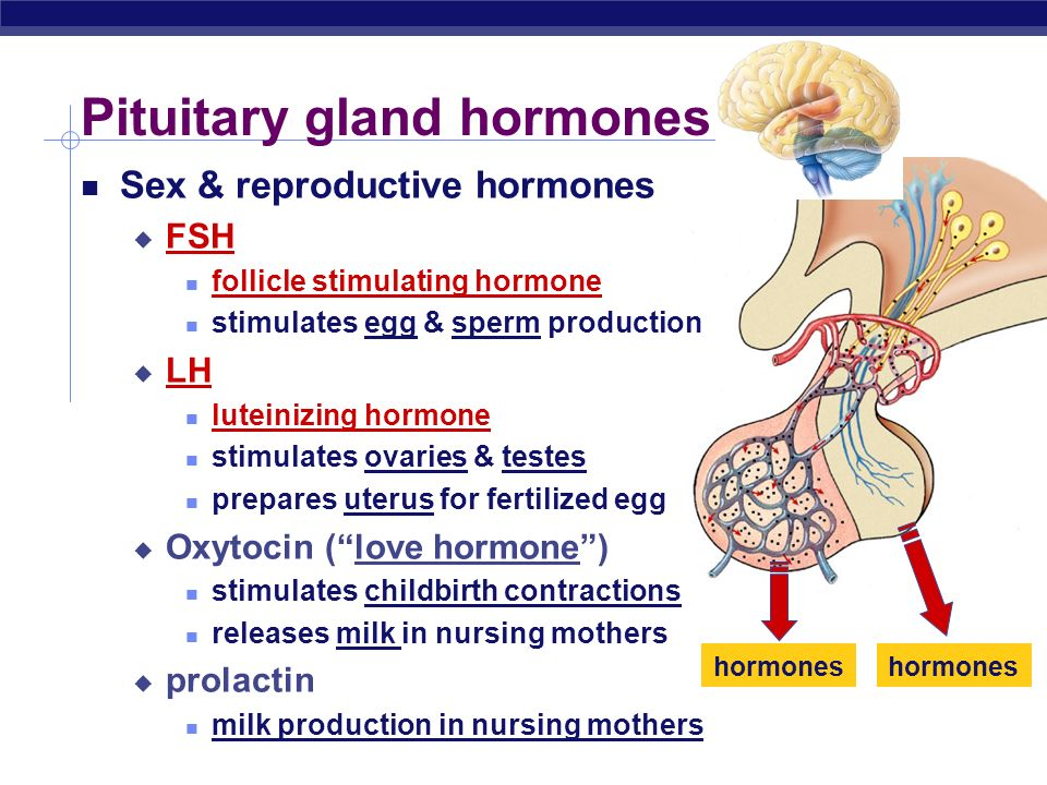 Follicle stimulating hormone sperm production