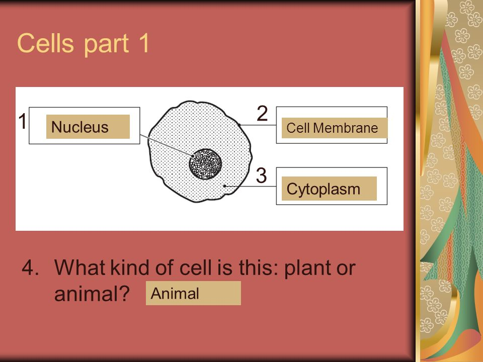 Cells part What kind of cell is this: plant or animal Nucleus