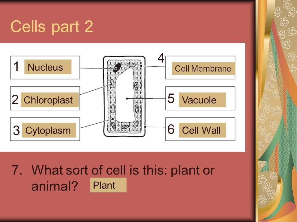 Cells part What sort of cell is this: plant or animal