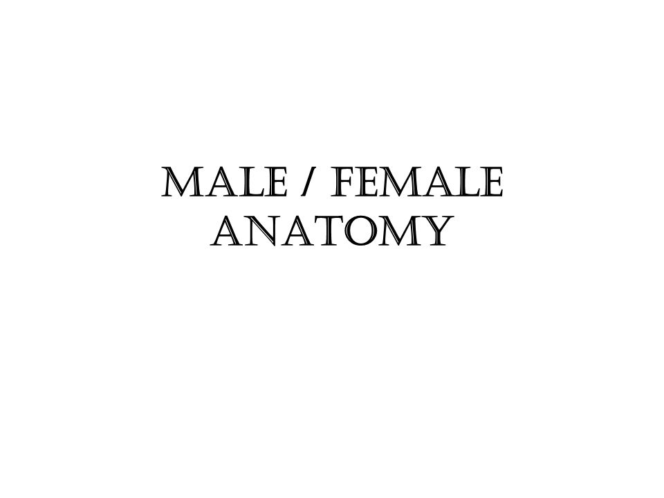 Male / female anatomy. - ppt video online download