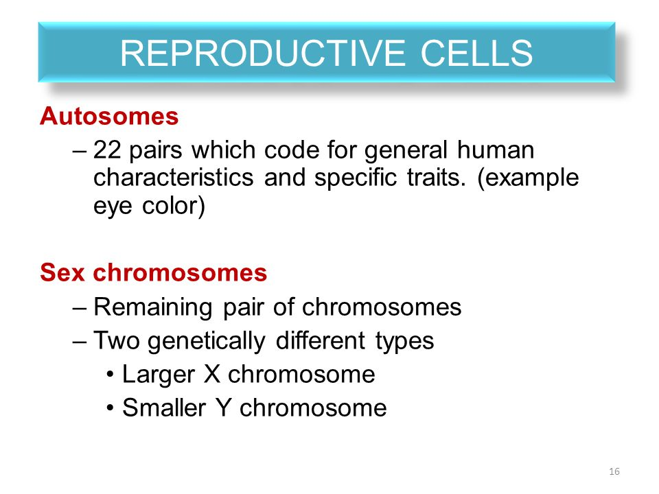 Difference between autosomes and sex chromosomes pic 56