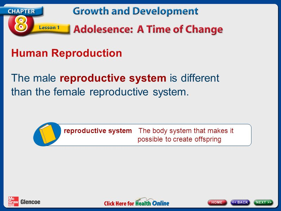 Human Reproduction The male reproductive system is different than the female reproductive system.