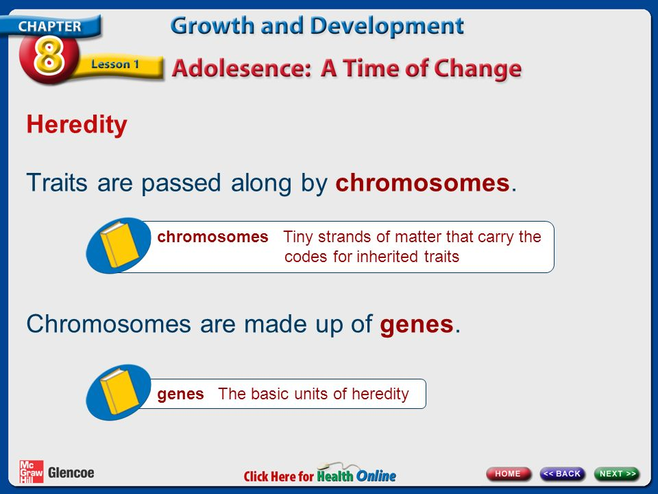 Traits are passed along by chromosomes.