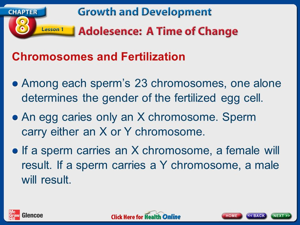 Chromosomes and Fertilization