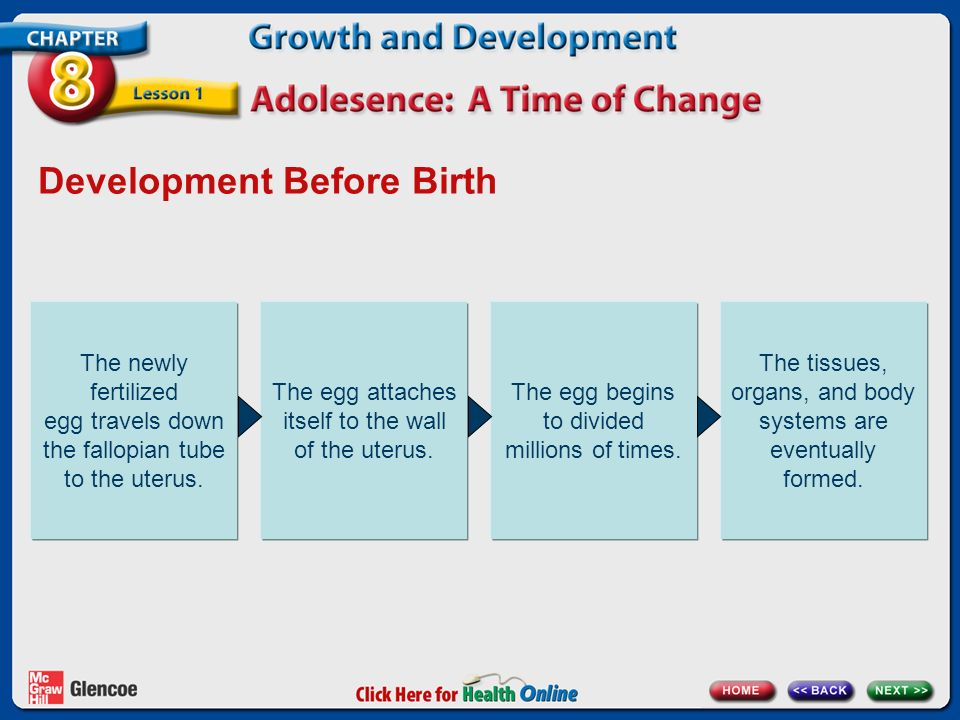 Development Before Birth