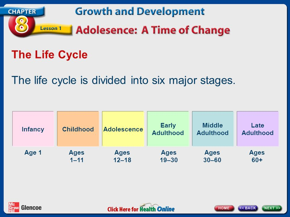 The life cycle is divided into six major stages.