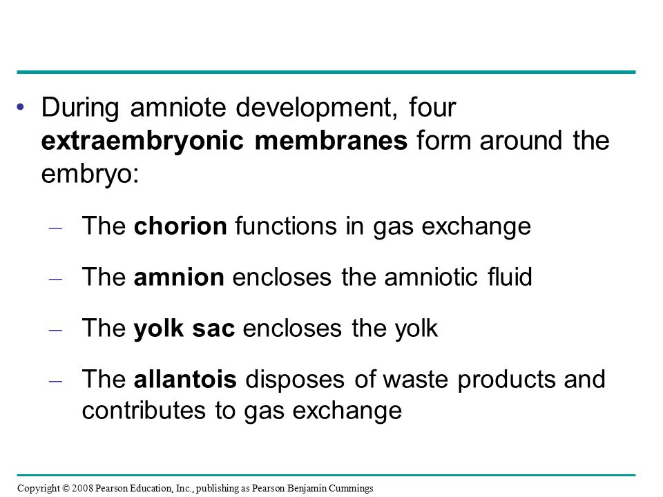 During amniote development, four extraembryonic membranes form around the embryo: