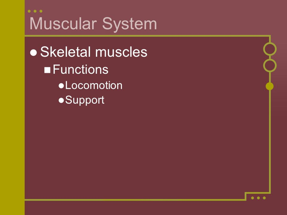 Muscular System Skeletal muscles Functions Locomotion Support