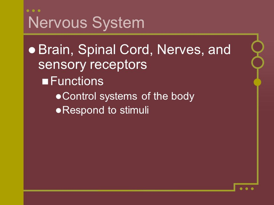 Nervous System Brain, Spinal Cord, Nerves, and sensory receptors