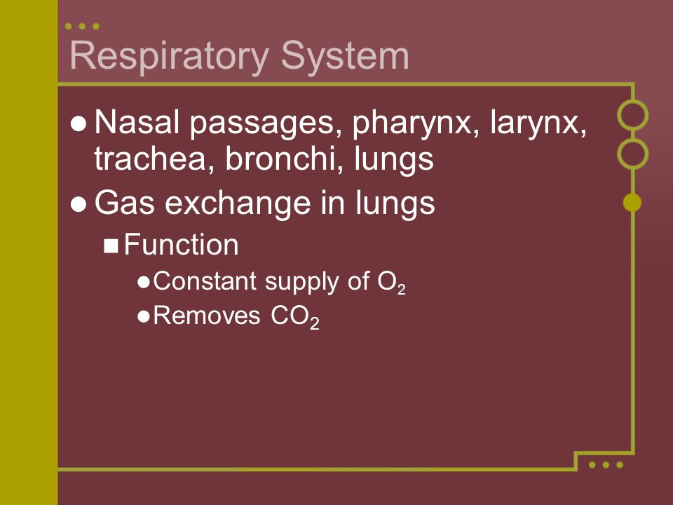 Respiratory System Nasal passages, pharynx, larynx, trachea, bronchi, lungs. Gas exchange in lungs.