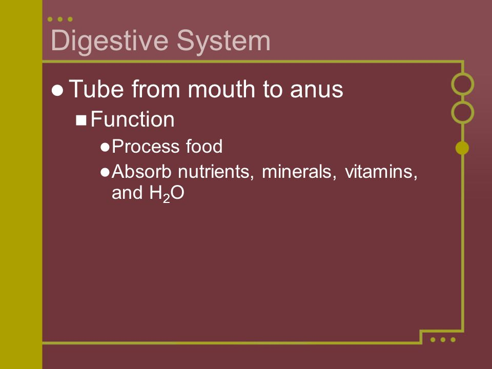 Digestive System Tube from mouth to anus Function Process food