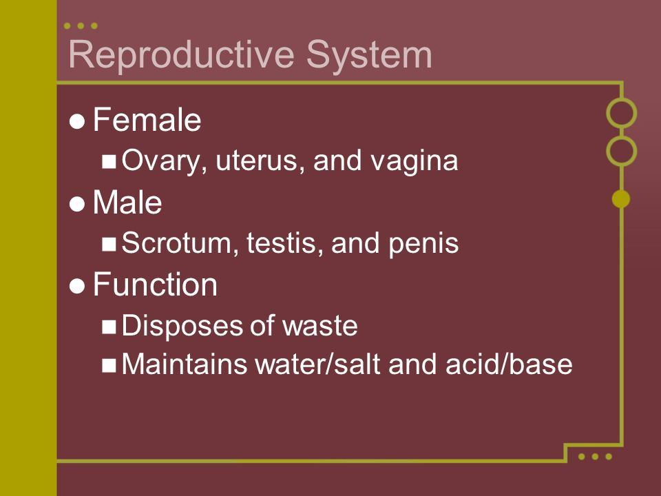 Reproductive System Female Male Function Ovary, uterus, and vagina