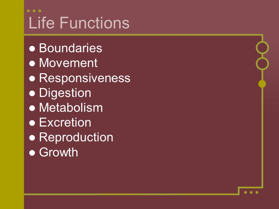 Life Functions Boundaries Movement Responsiveness Digestion Metabolism