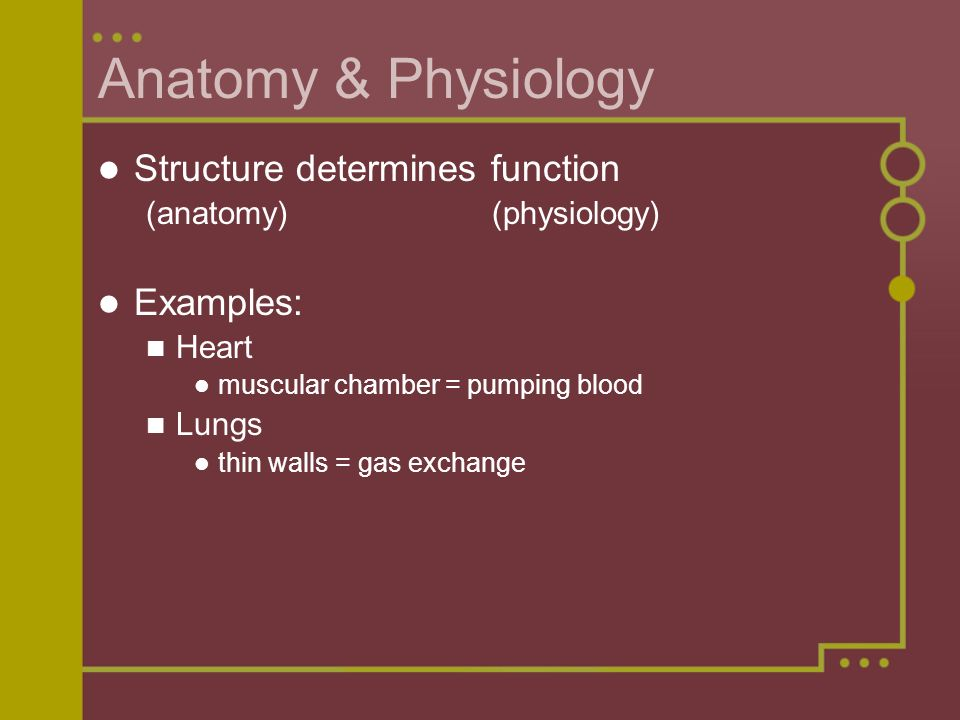 Anatomy & Physiology Structure determines function Examples: