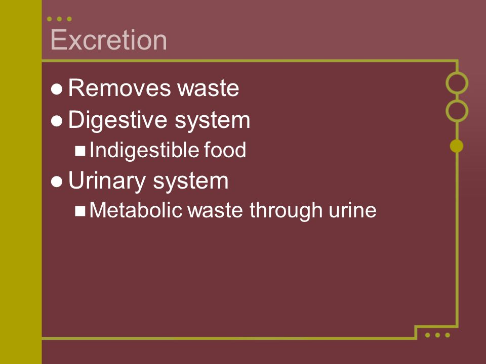 Excretion Removes waste Digestive system Urinary system