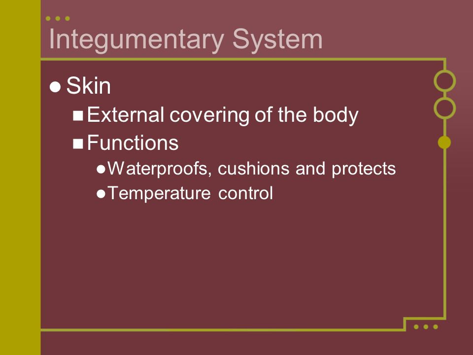 Integumentary System Skin External covering of the body Functions