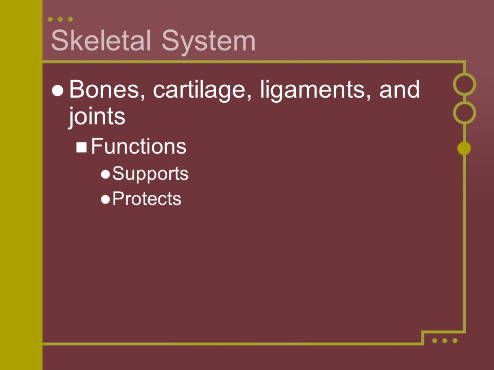 Skeletal System Bones, cartilage, ligaments, and joints Functions