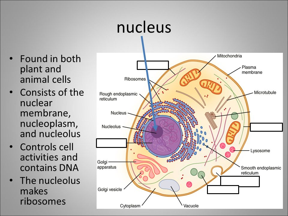 The cell theory and ho...
