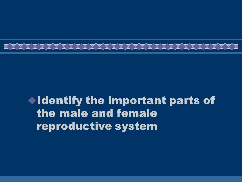 Identify the important parts of the male and female reproductive system