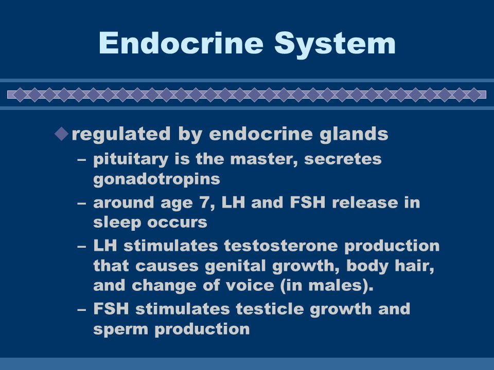 Endocrine System regulated by endocrine glands