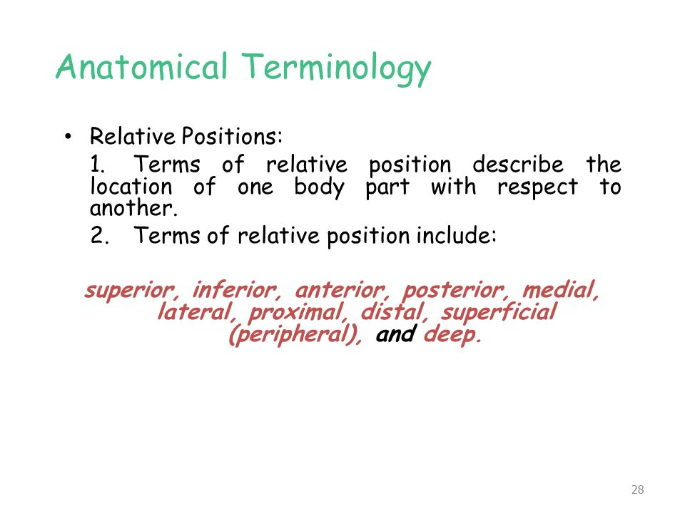 Relative Positions Anatomy