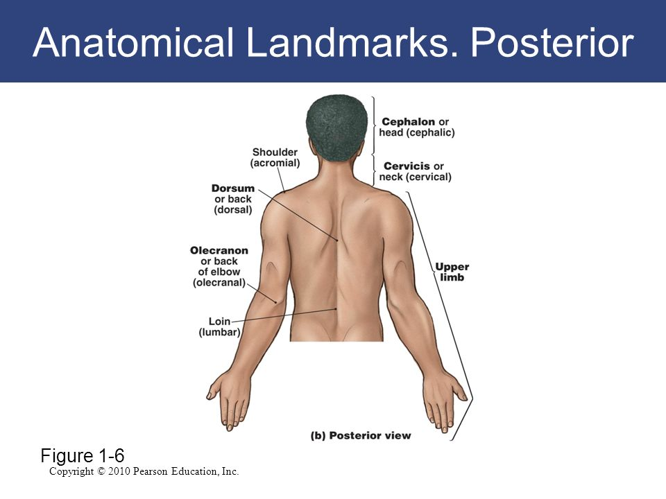 Major Anatomical Regions Landmarks Directions And Cavities