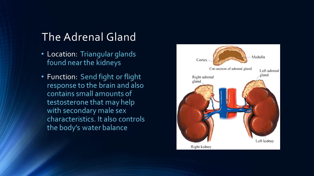 adrenal gland Adrenal tumors alternative names: adrenocortical carcinoma, adrenal adenoma, pheochromocytoma what are adrenal tumors what are the signs of adrenal tumors what causes adrenal tumors.