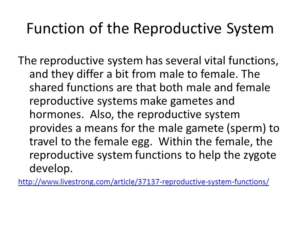 Reproductive System And Developement Ppt Video Online Download