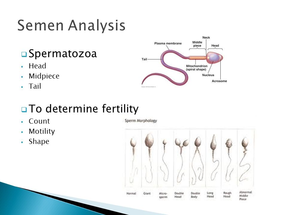 Sperm analysis collection problem
