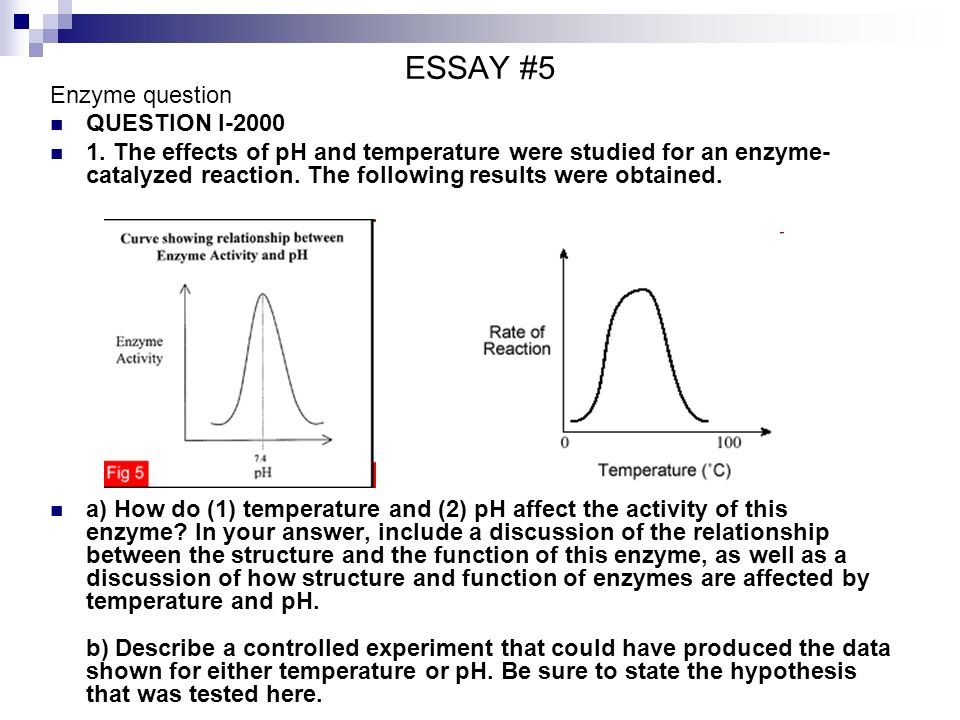 essay focus question