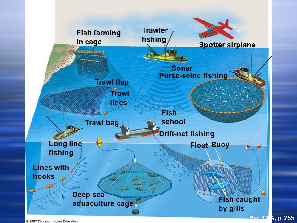 W Fishing Hooks Marine Biodiversity Th...
