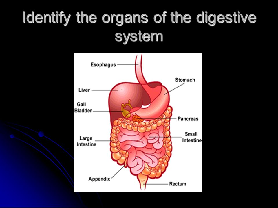 Organs Of The Digestive Tract Through Which Food Passes