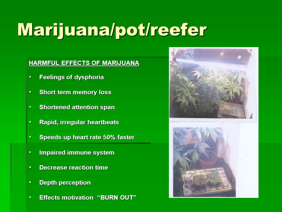 harmful effects of marijuana The osc documentary film on the negative effects of marijuana on our youth--adolescents, teenagers and young adults whose brains are still forming other side of cannabis wwwoscdoccom.