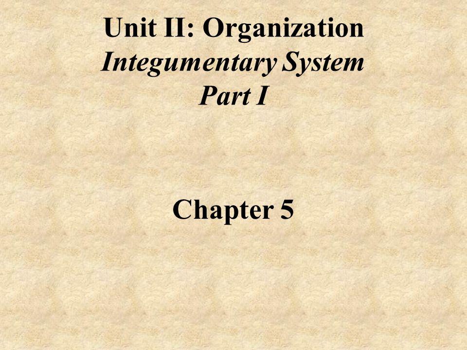 Unit+II%3A+Organization+Integumentary+System+Part+I+Chapter+5 unit ii organization integumentary system part i chapter ppt video
