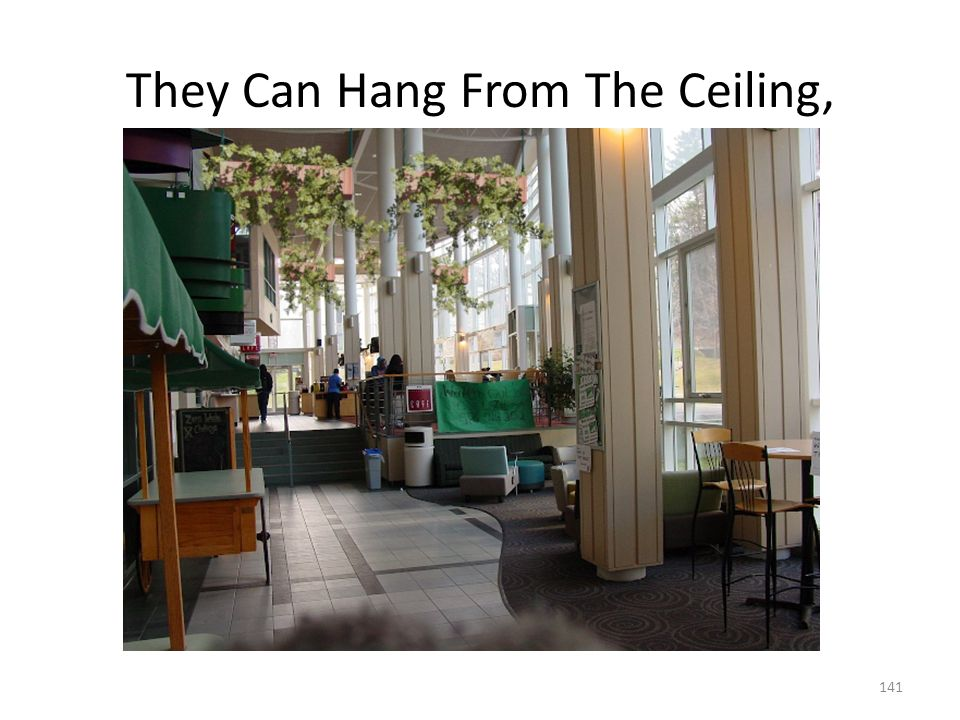 They Can Hang From The Ceiling,